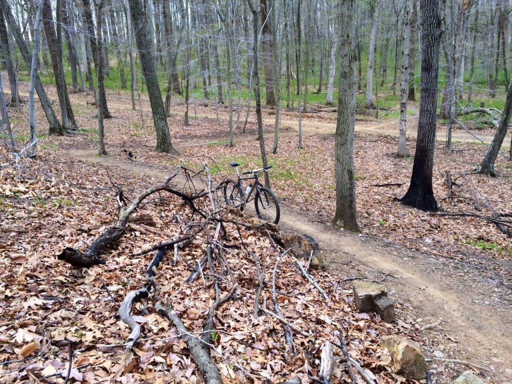 Trail Pics-image.jpg