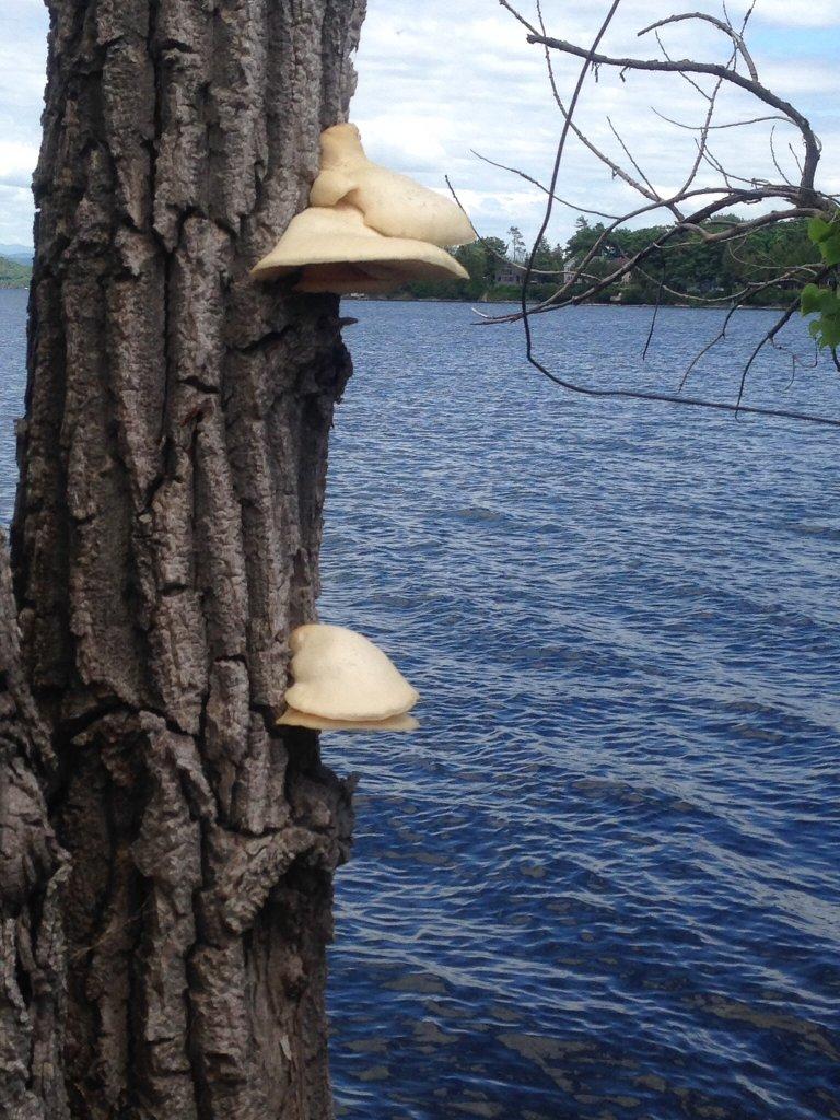 Mushrooms....Post your pics...-image.jpg