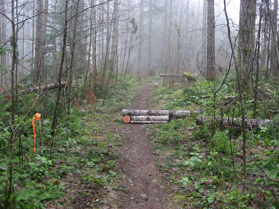 Backyard Trails-image00024.jpg