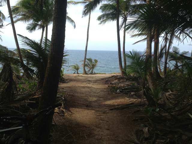 Just came out of Cerro Gordo trail in PR-imageuploadedbytapatalk1335530740.731303.jpg