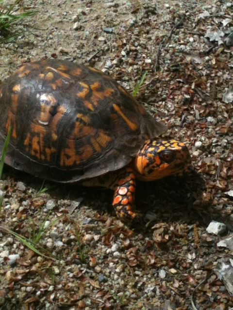 Wildlife you have seen on trail...post your pics...-imageuploadedbytapatalk1336308728.743781.jpg