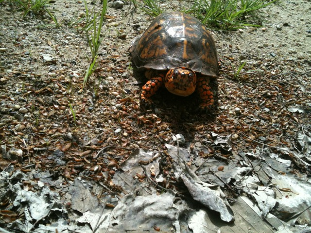 Wildlife you have seen on trail...post your pics...-imageuploadedbytapatalk1336308778.561481.jpg