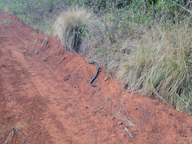 Wildlife you have seen on trail...post your pics...-imageuploadedbytapatalk1350940839.891930.jpg