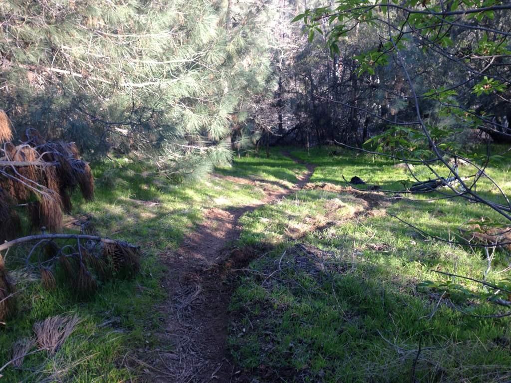 Trail Building in Eldo Hills-imageuploadedbytapatalk1361154284.486389.jpg