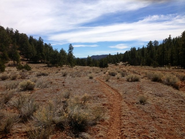 The NM Trail Pix Thread-imageuploadedbytapatalk1363398505.482694.jpg