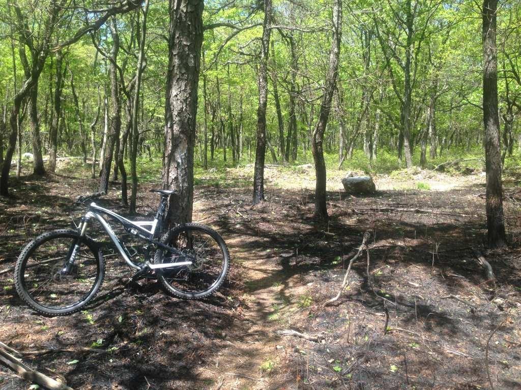 Broad Mountain Loop Trail (Jim Thorpe) ... Ruined!-imageuploadedbytapatalk1369820202.007037.jpg