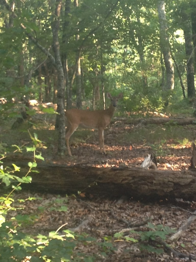 Wildlife you have seen on trail...post your pics...-imageuploadedbytapatalk1375722609.507776.jpg