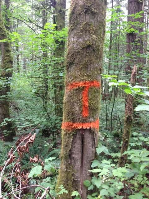 Upper Tokul West being painted orange?-imageuploadedbytapatalk1377288499.628115.jpg
