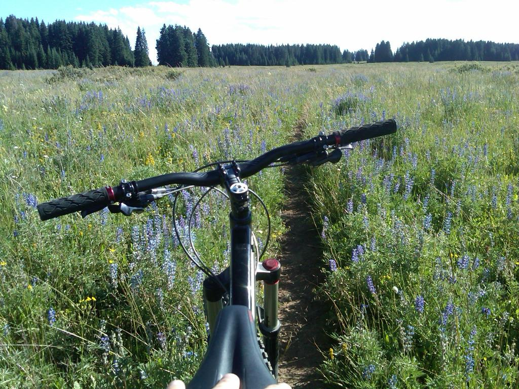 2010 Specialized Enduro: A long term review from an average guy. (With Pics)-img-20110810-00165.jpg