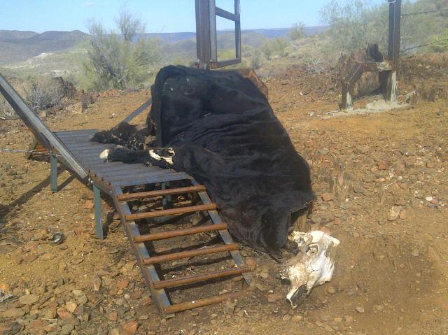 Cattle Guard Fail On The Little Pan Loop Mtbr Com