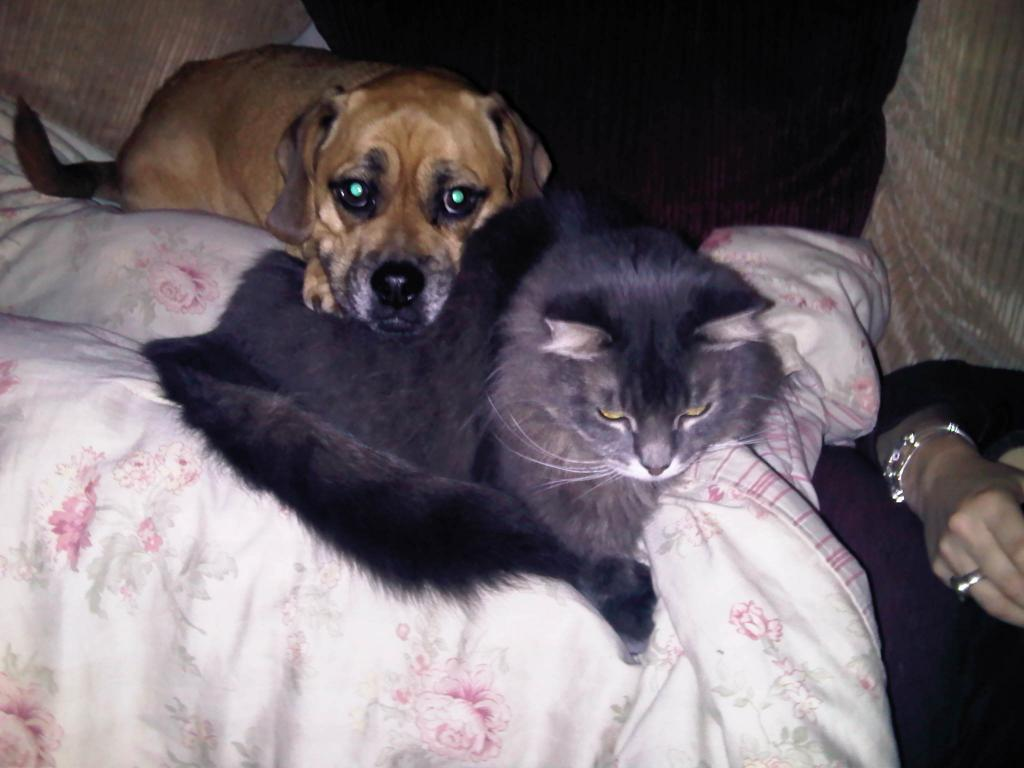 Cat Passion (here kittie, kittie, my new best friend...) Post your cat photos.-img00213-20101119-2000.jpg