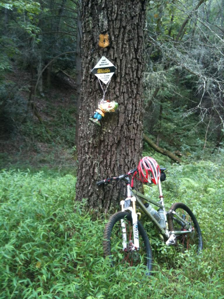 Adventures with the Pisgah Gnome-img_0029.jpg