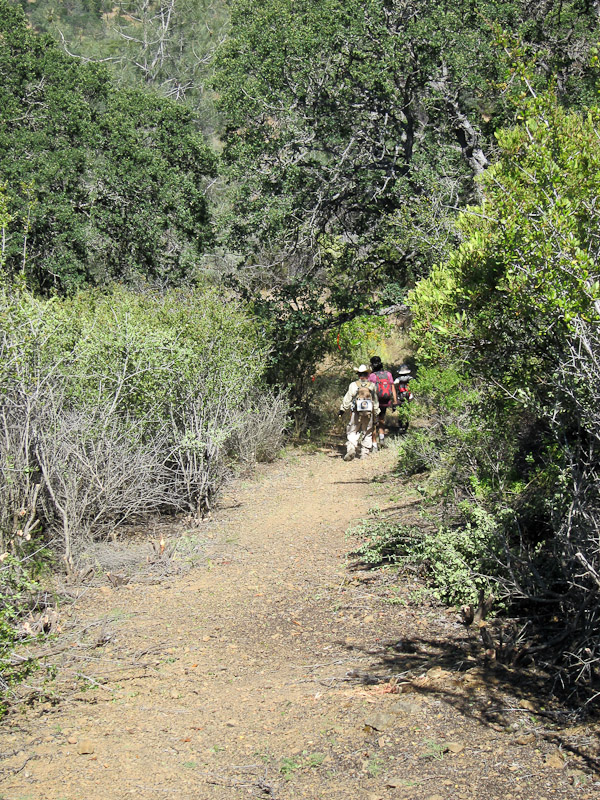 Henry W Coe Trail Work 2nd Saturday June 12 White Tank (Gibbon)-img_0048.jpg