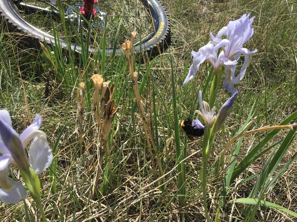 Botany Thread-img_0122.jpg
