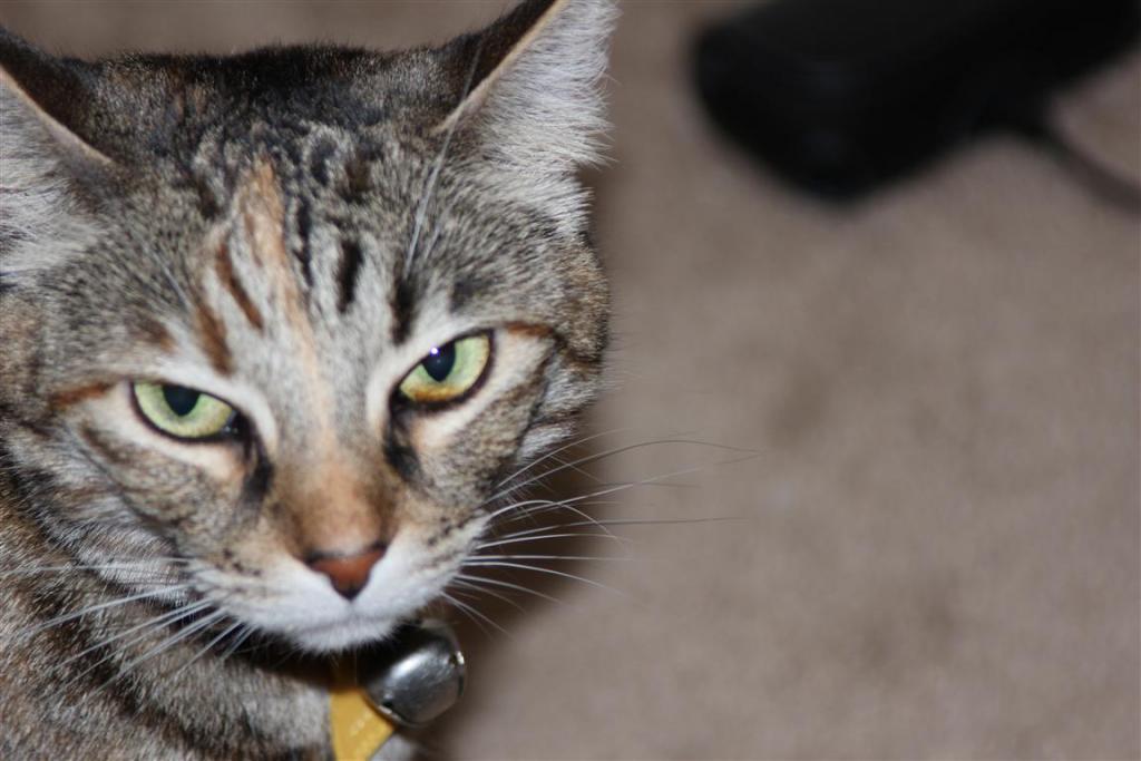 Cat Passion (here kittie, kittie, my new best friend...) Post your cat photos.-img_0165-medium-.jpg