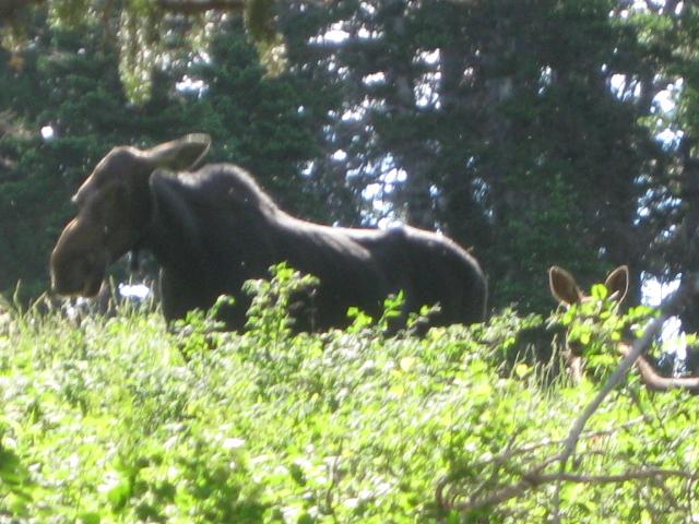 animal encounters-img_0173.jpg