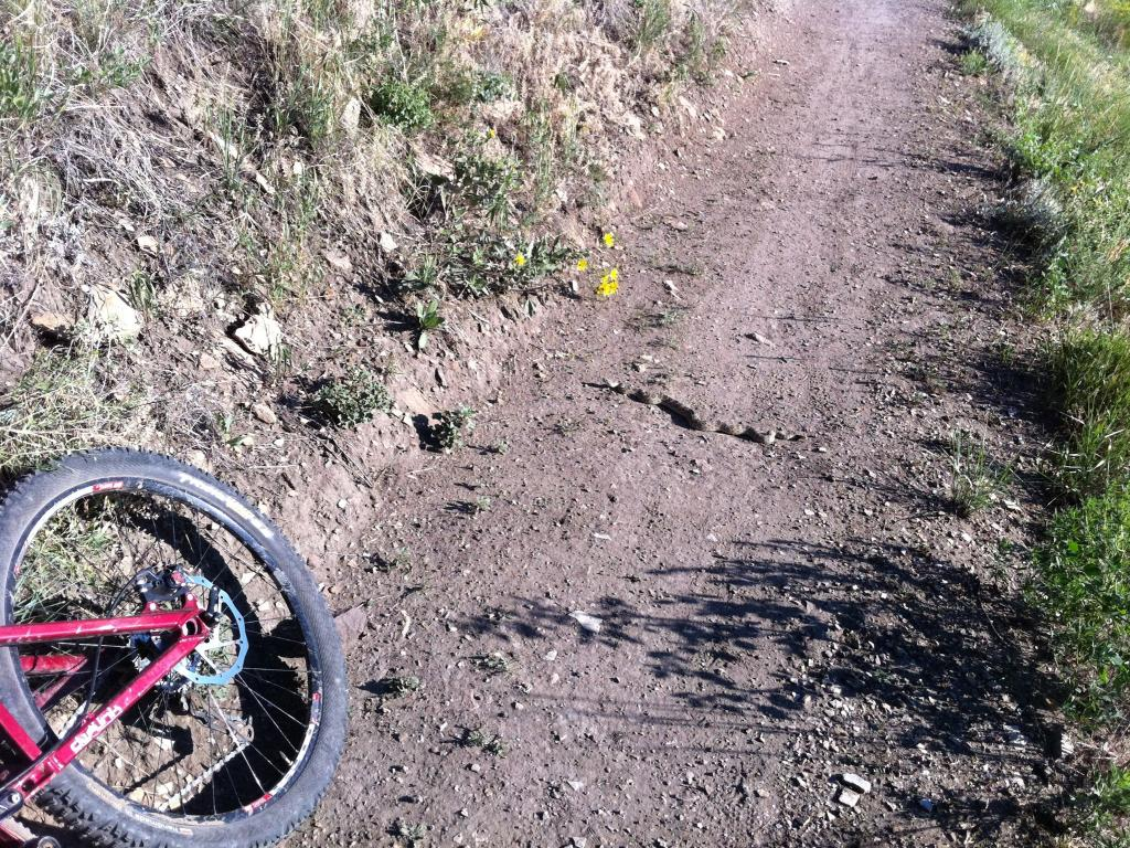 Who's run over a Rattler?  now that its snake season-img_0180.jpg