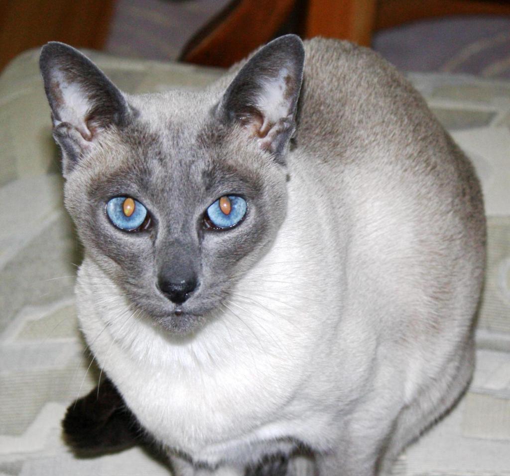 Cat Passion (here kittie, kittie, my new best friend...) Post your cat photos.-img_0181.jpg