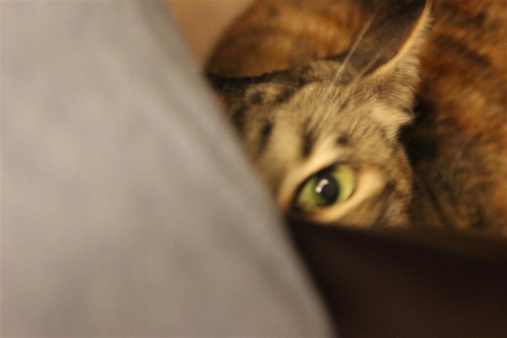 Cat Passion (here kittie, kittie, my new best friend...) Post your cat photos.-img_0184-medium-.jpg