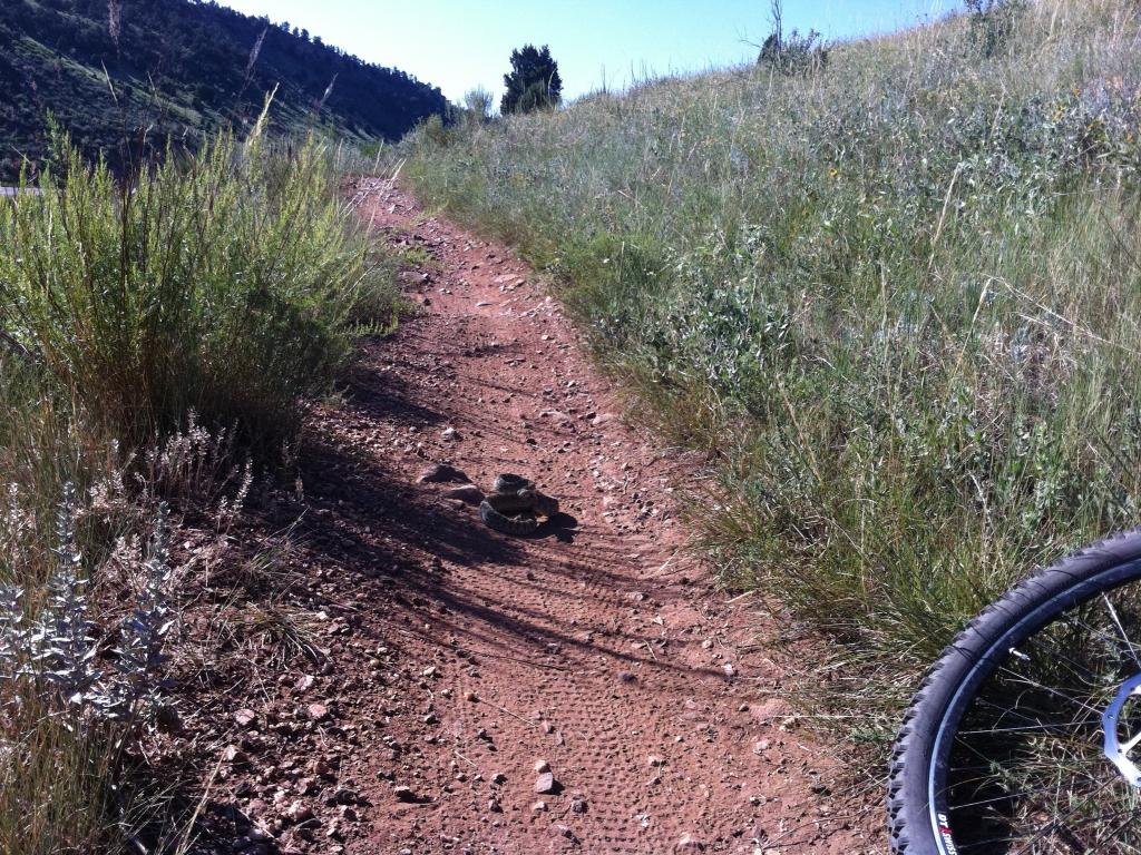 Who's run over a Rattler?  now that its snake season-img_0203.jpg