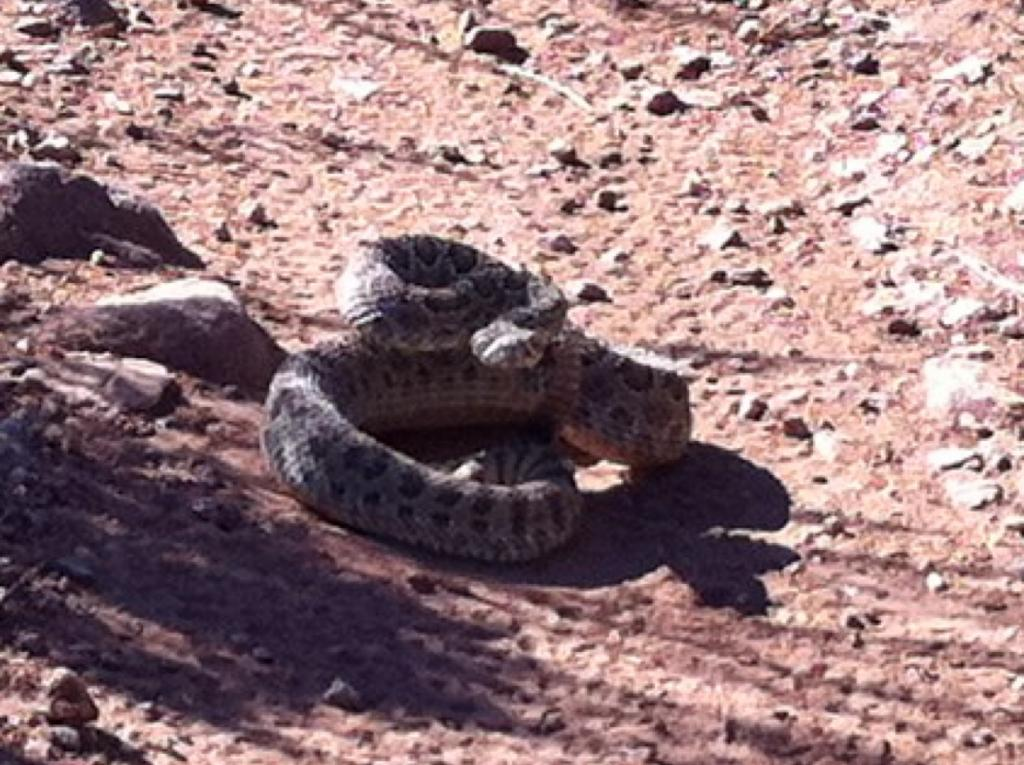 Who's run over a Rattler?  now that its snake season-img_0205.jpg