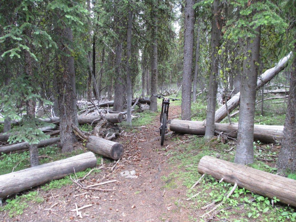 Thunder Mtn-Rattlesnake Ridge Loop, Salmon area.-img_0212.jpg
