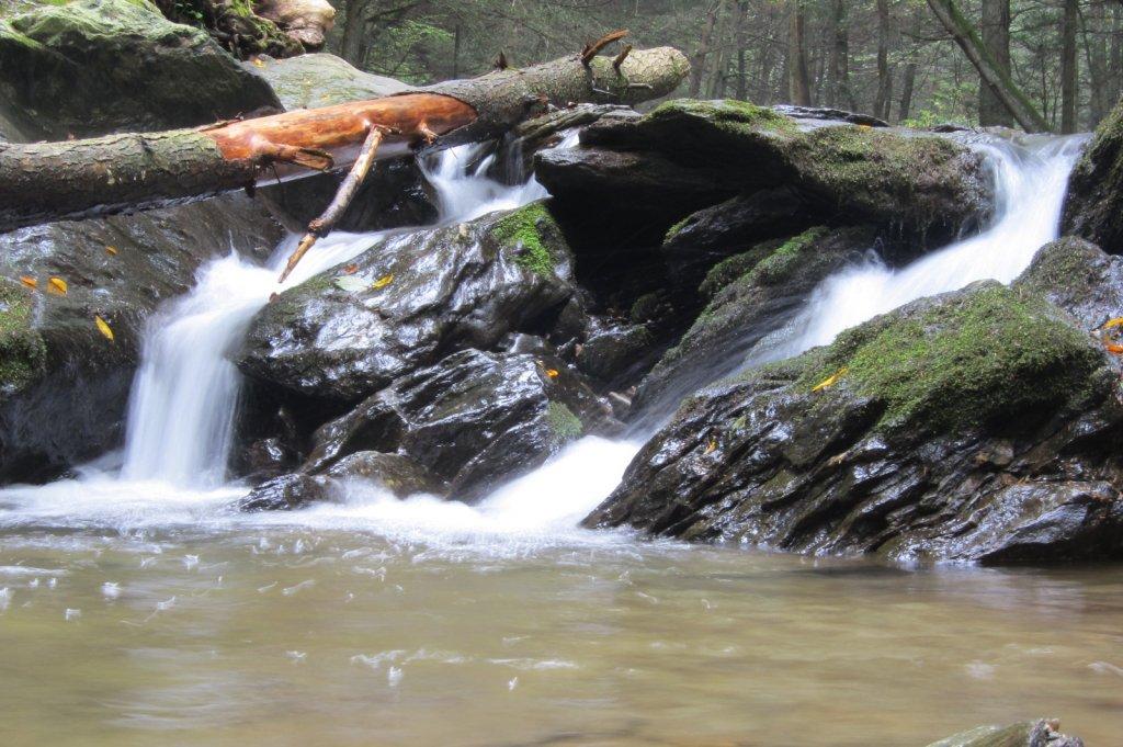 Good Compact Trail Camera - Need Advice-img_0222.jpg