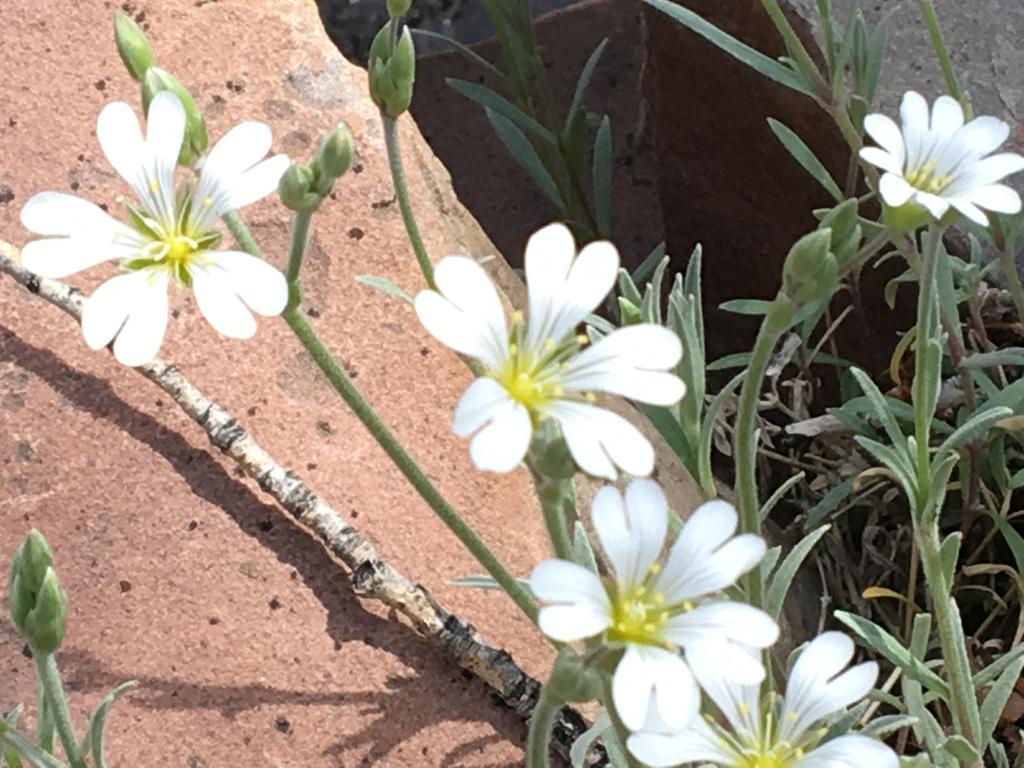 Botany Thread-img_0276.jpg