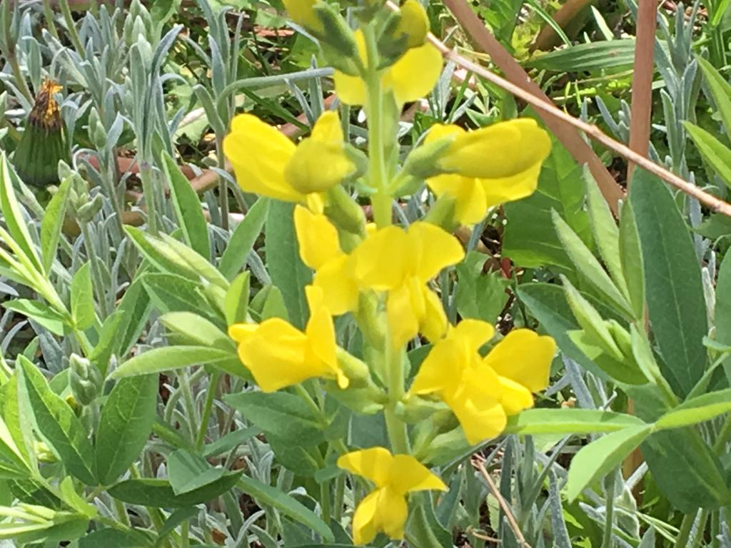 Botany Thread-img_0278.jpg