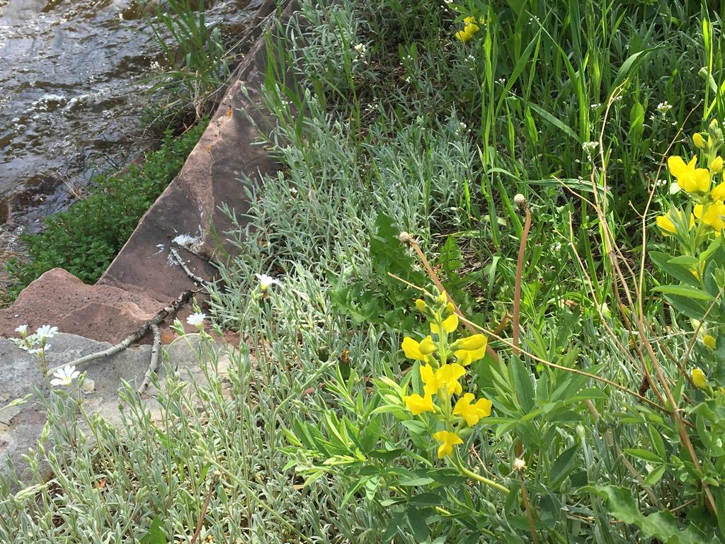 Botany Thread-img_0279.jpg