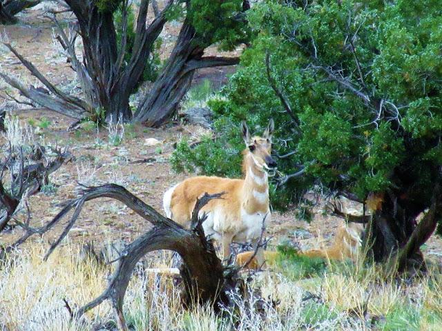 animal encounters-img_0341.jpg
