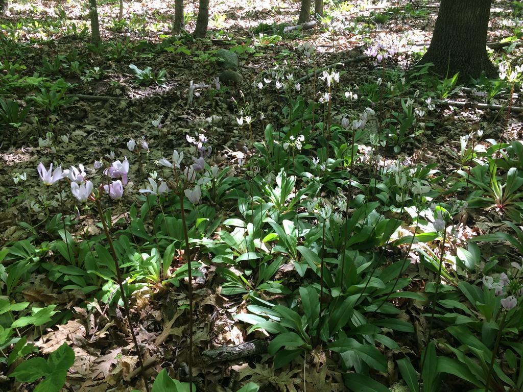 Botany Thread-img_0354.jpg