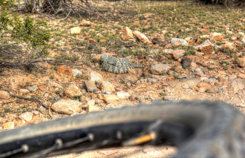 Speaking of rattlesnakes-img_0379_80_81_tonemapped-large-.jpg