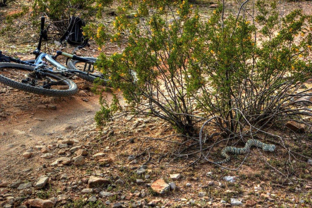 Speaking of rattlesnakes-img_0391-large-.jpg