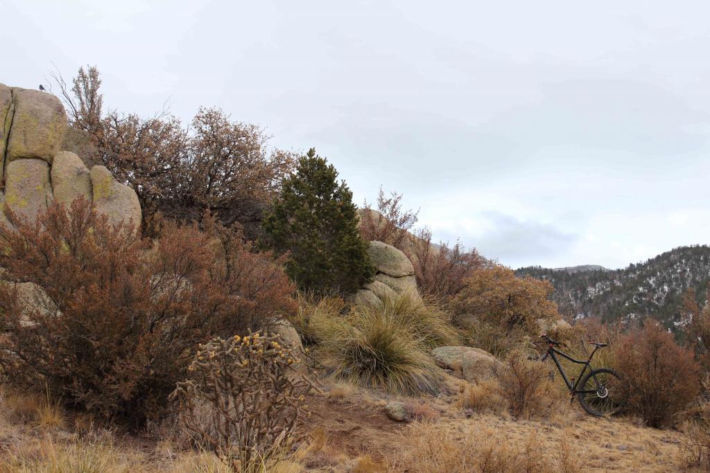 The NM Trail Pix Thread-img_0420a.jpg