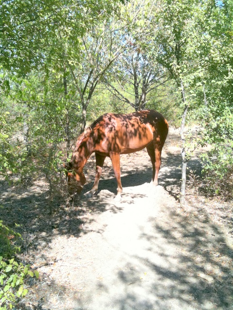 Wildlife you have seen on trail...post your pics...-img_0436.jpg
