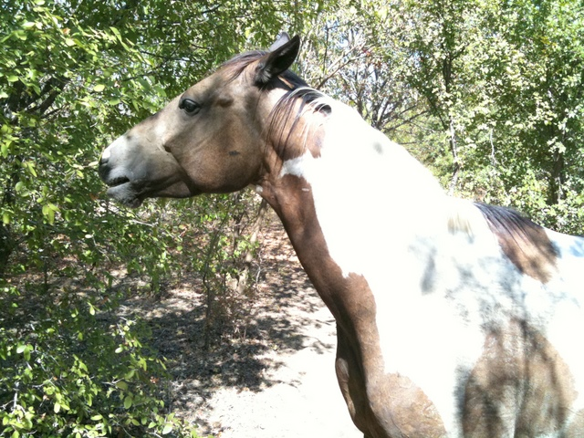 Wildlife you have seen on trail...post your pics...-img_0440.jpg