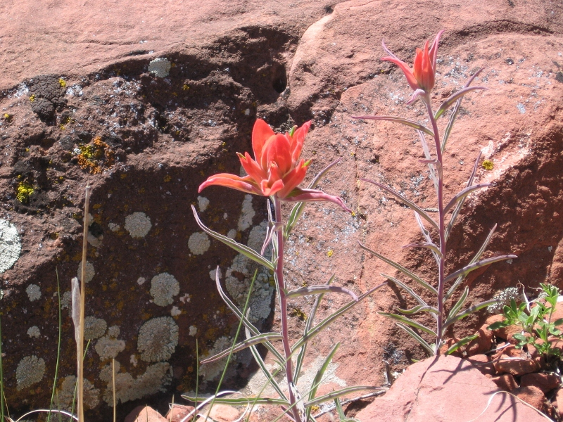 AZ Photo Friday - April 29th-img_0459-800x600-.jpg
