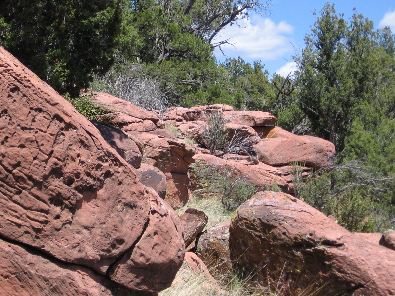 AZ Photo Friday - April 29th-img_0461-800x600-.jpg