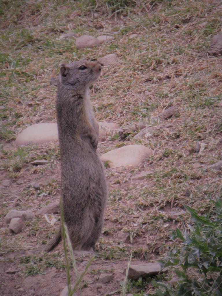 animal encounters-img_0524.jpg
