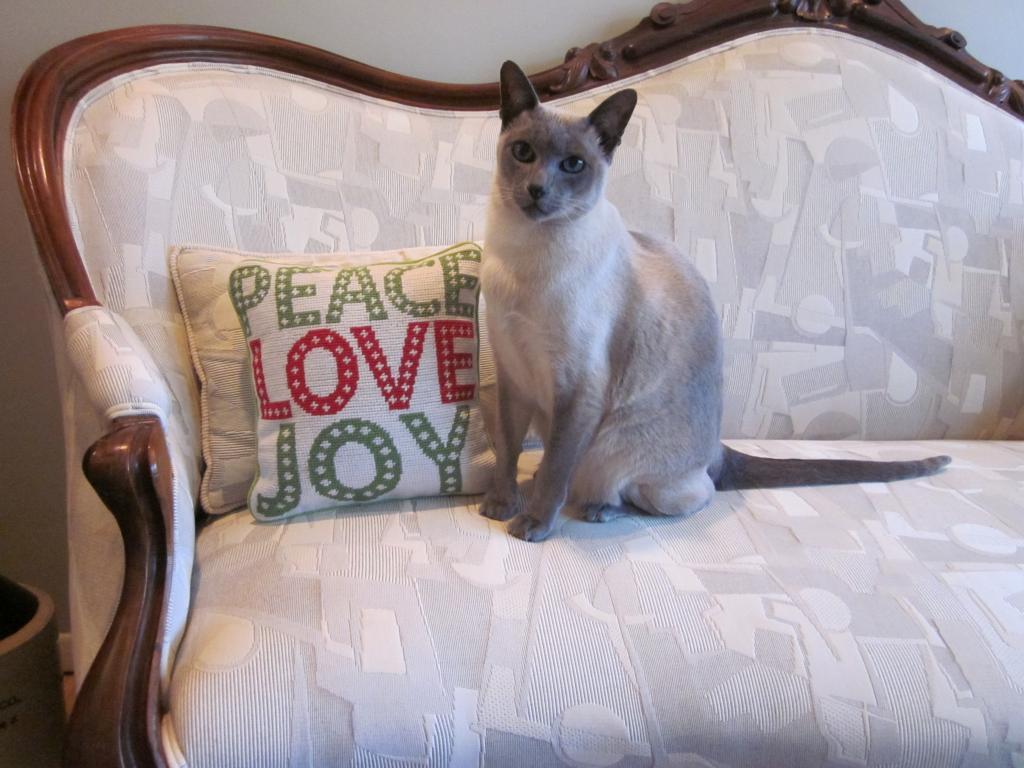 Cat Passion (here kittie, kittie, my new best friend...) Post your cat photos.-img_0525.jpg