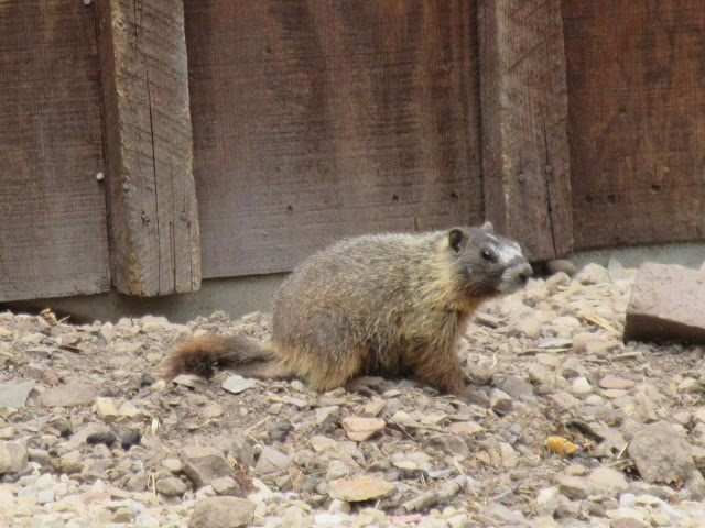 animal encounters-img_0529.jpg