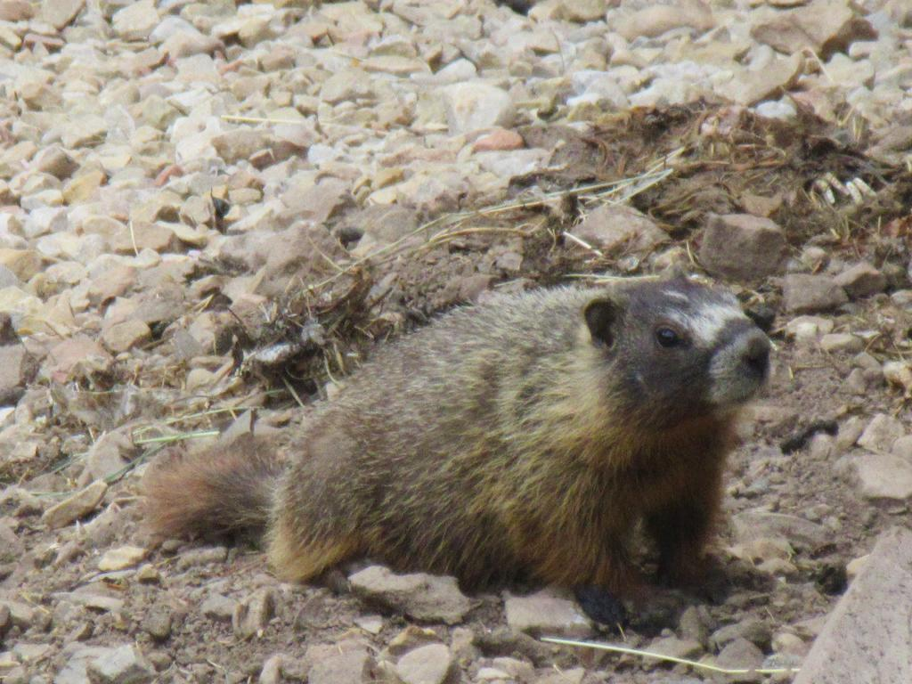 animal encounters-img_0535.jpg