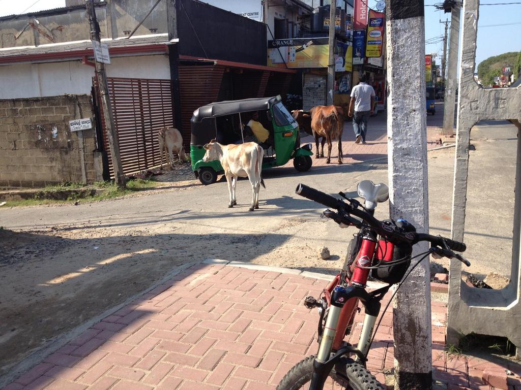 Turner in Sri Lanka-img_0709.jpg
