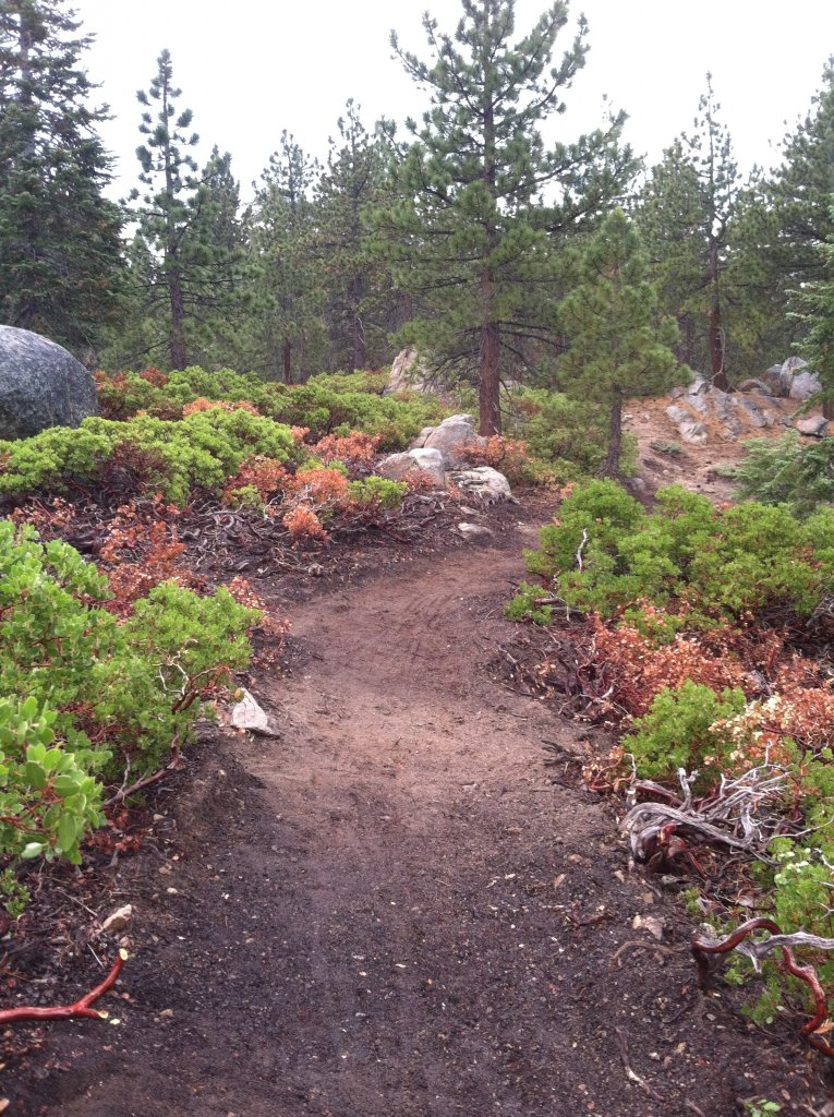 Big Bear old trails(outside Snow Summit property), are they still open to ride?-img_0738.jpg