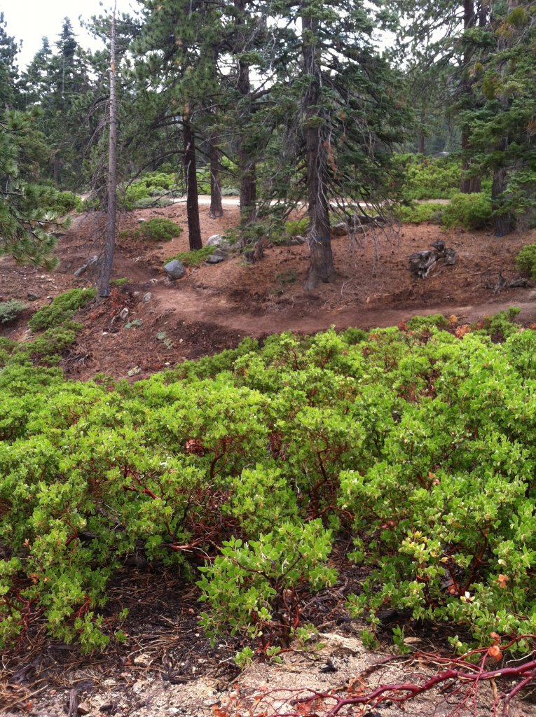 Big Bear old trails(outside Snow Summit property), are they still open to ride?-img_0740.jpg