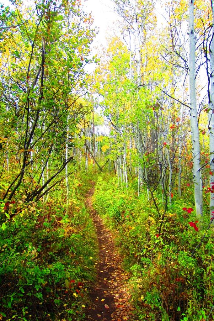 Fall is here!-img_0783.jpg