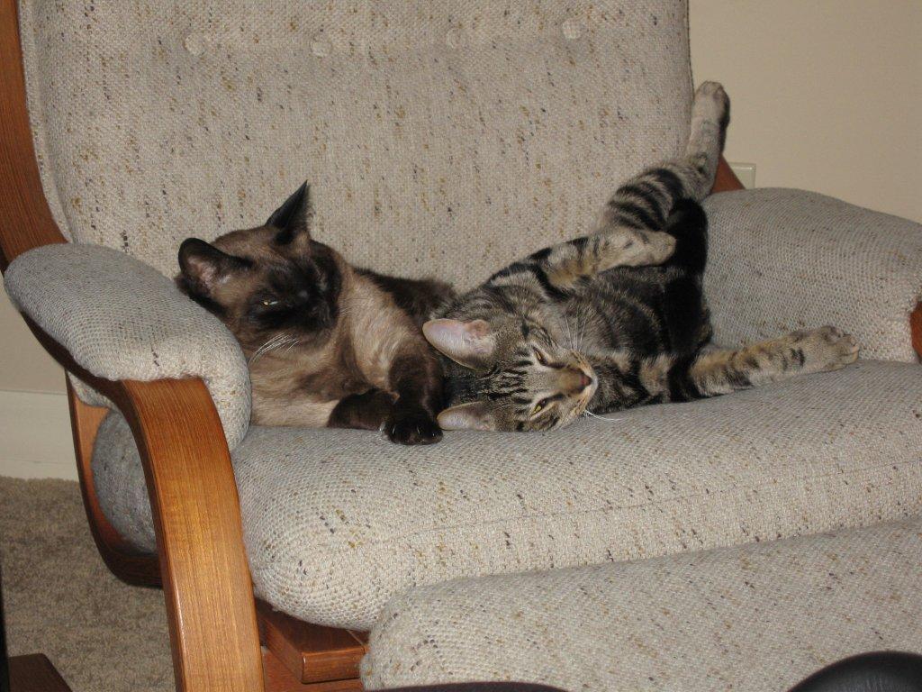 Cat Passion (here kittie, kittie, my new best friend...) Post your cat photos.-img_0785.jpg