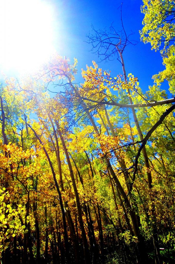Fall is here!-img_0819.jpg
