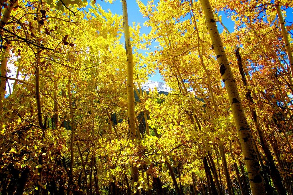 Fall is here!-img_0820.jpg